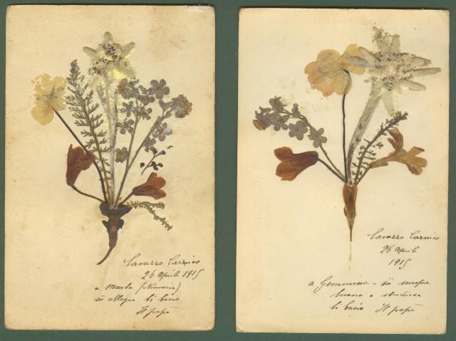 FIORI ALPINI. Due cartoline viaggiate in busta nel 1915