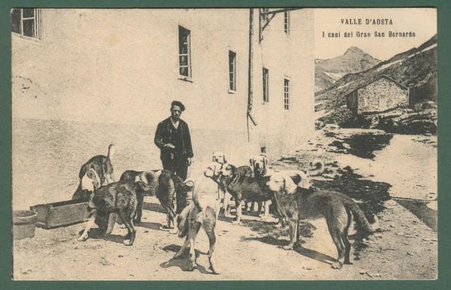 VALLE D'AOSTA. I cani del Gran San Bernardo.