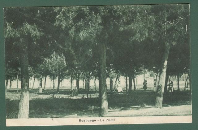 Abruzzo. ROSBURGO, Teramo. La pineta.