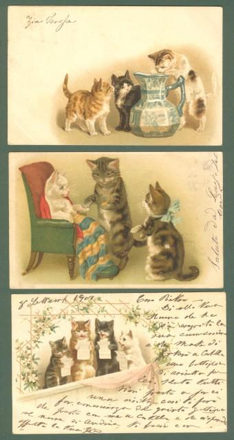 GATTI. Tre cartoline d'epoca viaggiate nel 1901 - 1902.